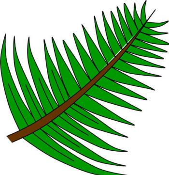palms-story